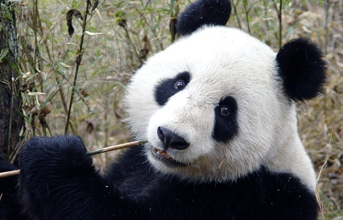 The Panda Customer Service Programme